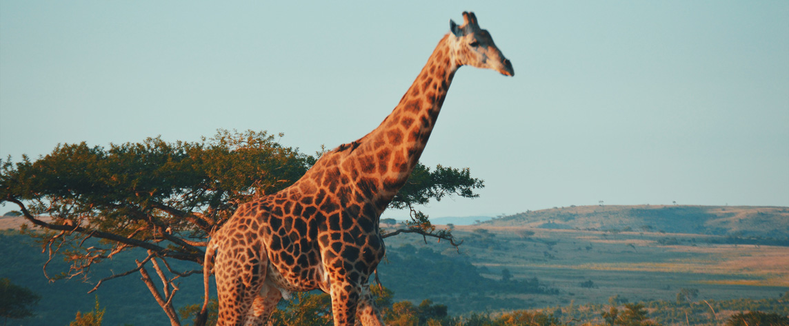 photo presentation afrique du sud
