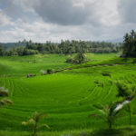 photo de rizière