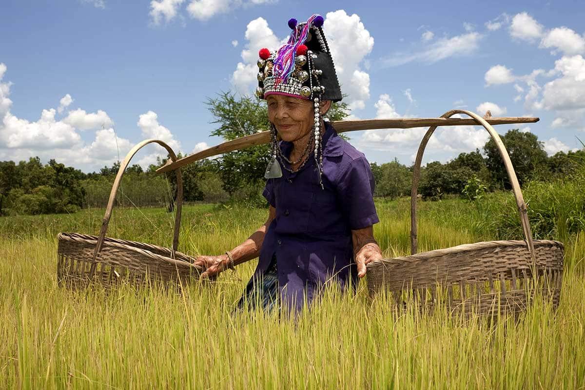 Thaïlande riziere