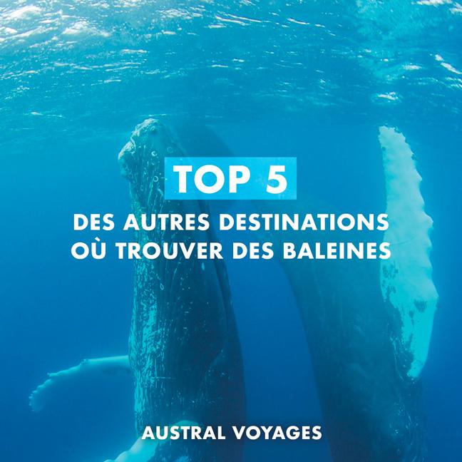 TOP 5 DES DESTINATIONS OU OBSERVER DES BALEINES